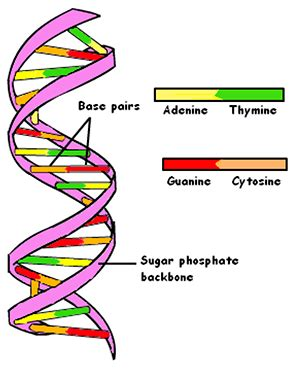 Essay On The Importance Of DNA And RNA - Essay Topics